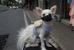 A pet dog named