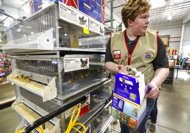 Whittney Young, pet and chicken department manager at the IFA Country Stores in Riverton, Utah, sells chicks to customers Thursday, March 26, 2020. The agricultural sector is seeing a run on supplies including chicken feed, horse feed, dog food and a higher interest for chicks. (Steve Griffin/The Deseret News via AP)