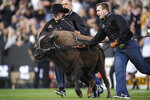 Handlers guide Colorado mascot Ralphie VI in the animal's traditional run before an NCAA college football game against Northern Colorado, Friday, Sept. 3, 2021, in Boulder, Colo. The run was the first for Ralphie VI. (AP Photo/David Zalubowski)
