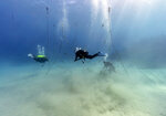 Divers, from left, Ray Taylor, Everton Simpson and Andrew Todd gather coral from a coral nursery to be planted inside the White River Fish Sanctuary Tuesday, Feb. 12, 2019, in Ocho Rios, Jamaica. The tropical turquoise waters near the coast of Jamaica are beautiful and inviting, but they disguise the devastation that lurks beneath. But swim a little farther and pieces of regenerating staghorn coral appear, strung out on a line, waiting to be tied onto rocks in an effort to repair the damage done to reefs by man and nature. (AP Photo/David J. Phillip)