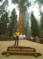 Clay Jordan, Superintendent of Sequoia and Kings National Park, briefs the media at the historic General Sherman, which was protected from fires by structure wrap at Sequoia National Park, Calif., Wednesday, Sept. 22, 2021. (AP Photo/Gary Kazanjian)