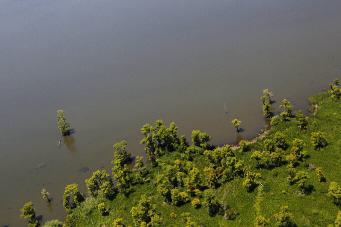 FILE - In this June 3, 2011 file photo, Cypress trees that formerly stood on land are seen from the air near the rapidly receding shoreline of Lake Salvador in Jefferson Parish, just outside New Orleans. Oil companies, Friday, Aug. 6, 2021,  fighting dozens of lawsuits that blame drilling for decades of coastal erosion and wetland loss in Louisiana are pleased with a new appeals court ruling that could lead to some of the cases being heard in federal court. (AP Photo/Gerald Herbert, File)