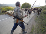 Shepherd Kim Mkrtchian armed with a Kalashnikov drives cows and sheep away from the front line near the town of Martuni, the separatist region of Nagorno-Karabakh, Friday, Oct. 23, 2020. Heavy fighting over Nagorno-Karabakh is continuing with Armenia and Azerbaijan trading blame for new attacks. Two Russia-brokered cease-fires collapsed instantly after taking effect, and the warring parties have continued to exchange blows with heavy artillery, rockets and drones. (AP Photo)