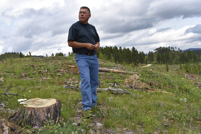 Blaine Cook, a retired U.S. Forest Service forest management scientist, is seen standing amid stumps of trees that were logged in the Black Hills National Forest, on July 14, 2021, near Custer City, S.D. Cook said his monitoring work last decade showed too many trees were being cut in the Black Hills. (AP Photo/Matthew Brown)