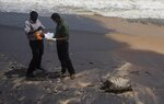 Sri Lankan wild life workers prepare to remove decomposed remains of a turtle lies on a beach polluted following the sinking of a container ship that caught fire while transporting chemicals off Kapungoda, outskirts of Colombo, Sri Lanka, Monday, June 21, 2021. X-Press Pearl, a Singapore-flagged ship sank off on Thursday a month after catching fire, raising concerns about a possible environmental disaster. (AP Photo/Eranga Jayawardena)