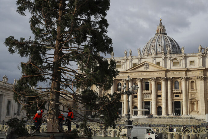 Workers secure a 26mt (85 feet) tall fir tree in St. Peter's Square, at the Vatican, Thursday, Nov. 21, 2019. The tree, which will be trimmed as a Christmas tree, comes from the Asiago Plateau in north-eastern Italy and was donated by the Veneto region. (AP Photo/Alessandra Tarantino)
