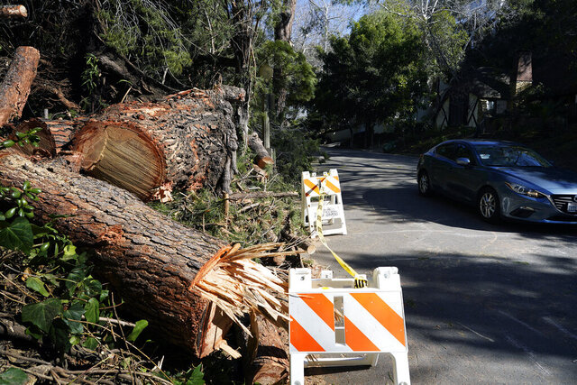 An Uber/Lyft car drives past the remains of a fallen tree in the Hollywood hills in Los Angeles, Monday, Feb. 3, 2020, after it was blown down by high winds. A cold front with damaging winds caused scattered power outages in Southern California on Monday and sent temperatures plunging from springlike levels just a few days earlier. (AP Photo/Richard Vogel)