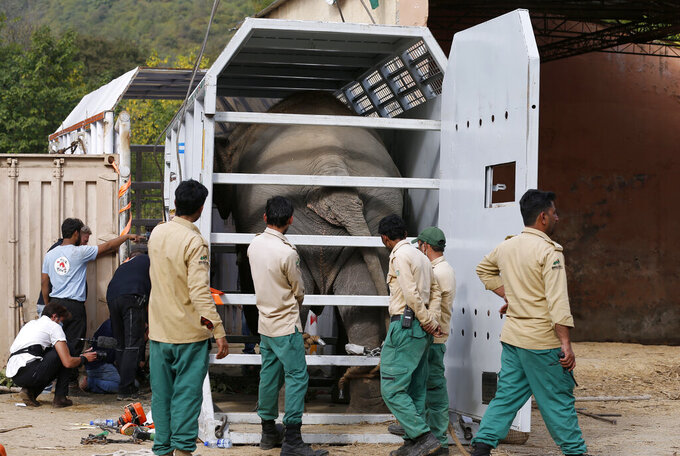 Pakistani wildlife workers arrange an elephant named Kaavan into a crate for transporting him to a sanctuary in Cambodia, at the Marghazar Zoo in Islamabad, Pakistan, Sunday, Nov. 29, 2020. Kavaan, the world's loneliest elephant, who became a cause celebre in part because America's iconic singer and actress Cher joined the battle to save him from his desperate conditions at the zoo. (AP Photo/Anjum Naveed)