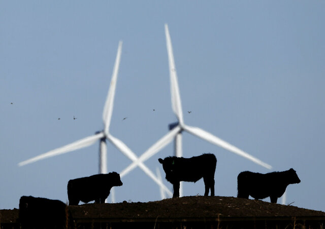 FILE - In this Dec. 9, 2015 file photo, cattle graze in a pasture against a backdrop of wind turbines near Vesper, Kan. A study published on Thursday, Nov. 5, 2020 in the journal Science, says how we grow, eat and waste food is a big climate change problem that may keep the world from reaching its temperature-limiting goals. (AP Photo/Charlie Riedel, File)