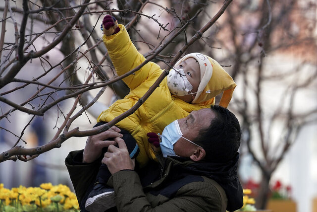 A man holds up a child, both wearing face masks to help curb the spread of the coronavirus, to reach out a tree branches at the Wangfujing shopping district in Beijing, Monday, Jan. 18, 2021. A Chinese province grappling with a spike in coronavirus cases is reinstating tight restrictions on weddings, funerals and other family gatherings, threatening violators with criminal charges. (AP Photo/Andy Wong)