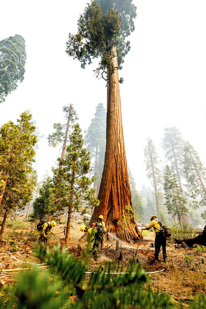 Firefighters mop up hot spots in the Trail of 100 Giants grove of the Sequoia National Forest, Calif., on Monday, Sept. 20, 2021. (AP Photo/Noah Berger)