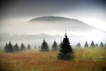 FILE - In this Sept. 27, 2017, file photo, fog drifts through a Christmas tree farm near Starks Mountain in Fryeburg, Maine. While the holiday season is a time of giving and thoughtfulness, it can also be a time of excess and waste. Americans throw away 25 percent more trash than usual between Thanksgiving and New Year's, that's about a million extra tons of garbage each week, according to the National Environmental Education Foundation (NEEF), a Washington, D.C.-based nonprofit group devoted to helping people to be more environmentally responsible. For holiday decorations, the Environmental Protection Agency recommends opting for a living tree that can be planted outdoors or eventually mulched.  (AP Photo/Robert F. Bukaty, File)