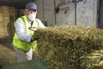 Stan Moll throws bales of hay onto a makeshift table in Anchorage, Alaska, Thursday, Feb. 13, 2020, so other Iditarod volunteers could place the bales into plastic bags. About 1,500 bales will be flown to checkpoints along the Iditarod Trail Sled Dog Race, which begins March 7, and will be put down on the snow and ice so the canine participants in the race have a warm place to sleep. (AP Photo/Mark Thiessen)