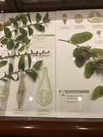 This Oct. 8, 2019 photo shows cross-sections of various plant reproductive systems in the Glass Flowers exhibit at the Harvard Museum of Natural History in Cambridge, Mass. The Glass Flowers date back to the 19th and early 20th centuries, and were intended to dazzle the public while educating botany students. They have been on display continuously at Harvard since 1893. This third-floor gallery at the Harvard Museum of Natural History is one of the institution's most beloved _ and most visited _ treasures. (Tracee Herbaugh via AP)
