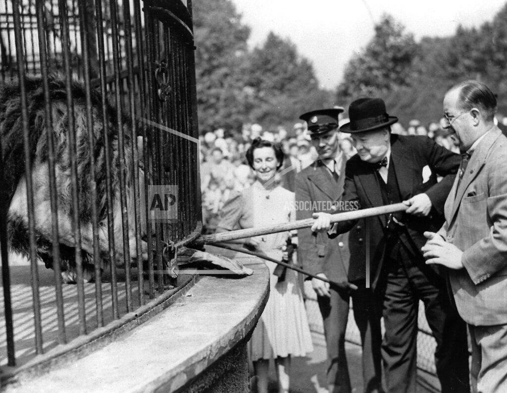 Associated Press International News England BRITISH PM CHURCHILL FEEDS LION