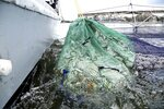 A load of dead fish remain in nets after being captured by a trawler on Southbound, Jessica and Toliver Tucker's shrimp boat, on Thursday, July 22, 2021, where Red Tide is decimating fish populations off Treasure Island, Fla. (Douglas R. Clifford /Tampa Bay Times via AP)
