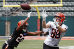 Cincinnati Bengals tight end Drew Sample (89) catches a pass against cornerback KeiVarae Russell (20) during practice at the team's NFL football facility, Wednesday, June 12, 2019, in Cincinnati. (AP Photo/John Minchillo)