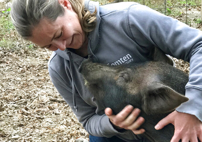 In this undated photo provided by taken in Gilford, N.H., Grover is held by Michele Devereaux. An animal sanctuary and a farm are working together to spare Grover, a slaughterhouse-bound piglet, to promote local agriculture in New Hampshire. Beans and Greens Farm of Gilford is hoping to take Grover to the Tomten Farm and Sanctuary in Haverhill where it will live out its days. (Jenifer Vickery/Tomtem Farm and Sanctuary via AP)
