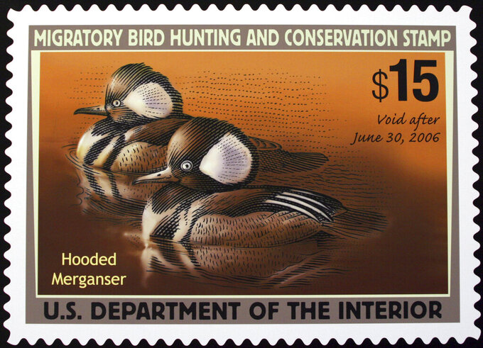 FILE - This June 30, 2005 file photo shows the 2005-2006 Federal Duck Stamp designed by Mark Anderson of Sioux Falls, S.D., displayed on Capitol Hill during the U.S. Fish and Wildlife Service's first day of sale for the 2005-2006 Federal Duck Stamp. Artists will no longer have to incorporate hunting imagery to win a coveted spot for their work on the federal duck stamp, reversing a Trump-era requirement. The U.S. Fish and Wildlife Service says eliminating the requirement from its annual Federal Duck Stamp contest will give artists more flexibility. (AP Photo/Lauren Victoria Burke)