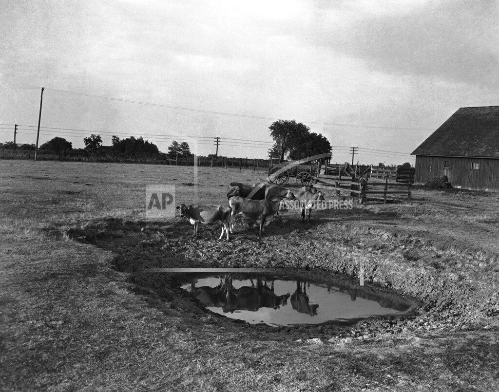 Watchf Associated Press Domestic News  Missouri United States APHS141563 The Dust Bowl Missouri 1936