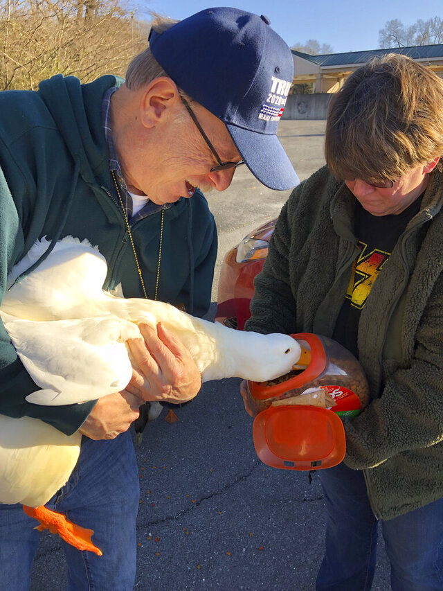Joe and Darcy Manzella, of Rome, give a white Pekin duck they named Aflac a boost into their cat food canister Tuesday, Jan. 7, 2020, as 23 others waited for more nibbles at their feet below at Silver Creek in Lindale, Ga. They've been feeding them all for the past year and have named each one. (K.T. McKee/The Rome News-Tribune via AP)