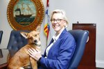 Alcaldesa poses for a photograph with Mayor Jane Castor in her office at the City of Tampa municipal building in Tampa, Florida on Thursday, September 5, 2019. The new official Tampa city dog, Alcaldesa, a mixed-breed that Mayor Jane Castor adopted from the Humane Society of Tampa Bay, will serve as an office dog. (Octavio Jones/Tampa Bay Times via AP)