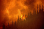 The windy fire burns along a ridge in Sequoia National Forest, Calif., on Monday, Sept. 20, 2021. (AP Photo/Noah Berger)