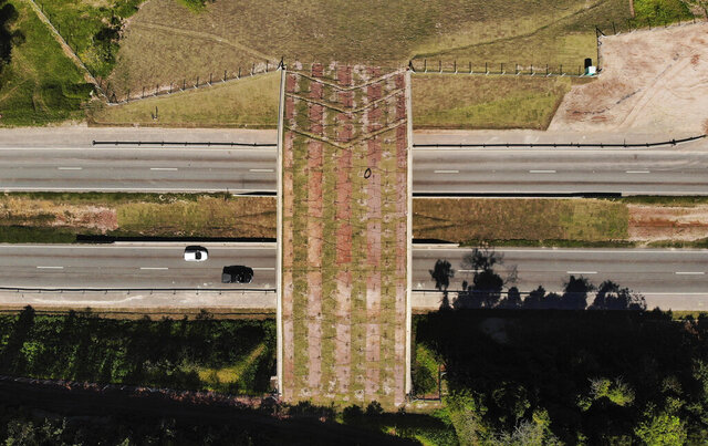 An eco-corridor for the endangered Golden Lion Tamarin crosses over an interstate highway in Silva Jardim, Rio de Janeiro state, Brazil, Thursday, Aug. 6, 2020. Once recently planted trees grow on the bridge, it will allow the primates to safely cross the busy highway that bisects one of the last Atlantic coast rainforest reserves. (AP Photo/Mario Lobao)