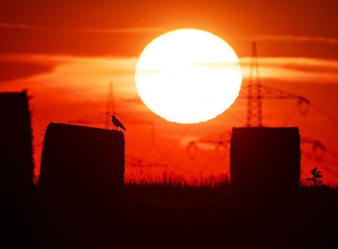 FILE - In this file photo dated Thursday, July 25, 2019, a bird sits on a straw bale on a field in Frankfurt, Germany, as the sun rises during an ongoing heatwave in Europe. The U.S. National Oceanic and Atmospheric Administration said Thursday Aug. 15, 2019, that July was the hottest month measured on Earth since records began in 1880. (AP Photo/Michael Probst, FILE)