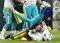 Injured Dolphins Football