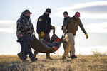 In this image provided by Montana Fish, Wildlife and Parks, volunteers and Montana Fish, Wildlife and Parks staff help move bighorn sheep from a helicopter drop-off point to where they were given a medical check and loaded into trailers for transfer to the Little Belt Mountains in Montana on Dec. 16, 2020. Montana wildlife officials have transplanted 49 bighorn sheep into the Little Belt Mountains, in an effort to create a new herd. (Morgan Jacobsen/Montana Fish, Wildlife and Parks via AP)