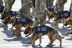 Soldiers with dogs march down main street during a military parade to celebrate Independence Day in Kyiv, Ukraine, Tuesday, Aug. 24, 2021. Ukraine mark the 30th anniversary of its independence with dogs taking part in the parade for the first time ever in Ukraine's independent history. (AP Photo/Efrem Lukatsky)