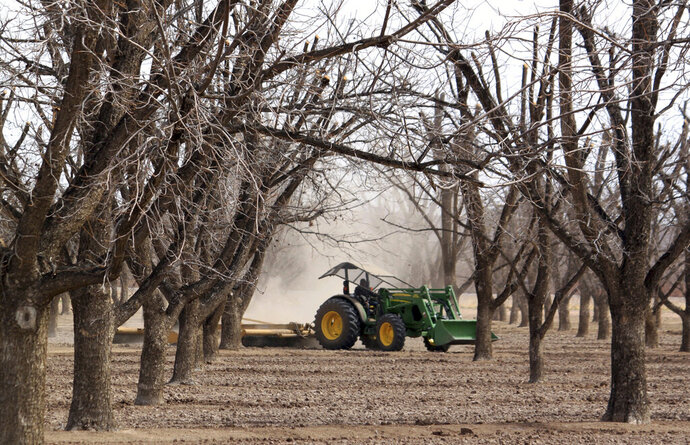 FILE - In this March 20, 2013 file photo, a tractor prepares a pecan orchard near Rincon, N.M., for the spring irrigation season. U.S. Sen. Martin Heinrich and Tom Udall recently signed on to a bipartisan letter from 12 senators urging U.S. Trade Representative Robert Lighthizer to negotiate with India to lift tariffs on pecans. (AP Photo/Susan Montoya Bryan, File)