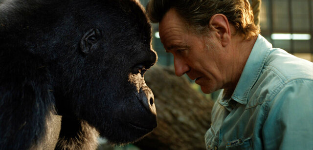 This image released by Disney Plus shows Bryan Cranston, right, with a gorilla named Ivan, voiced by Sam Rockwell, in a scene from