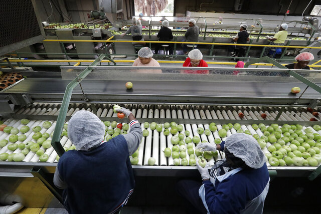 FILE - In this Feb. 5, 2020, file photo workers sort through tomatoes after they are washed before being inspected and packed, in Florida City, Fla. On Wednesday, Feb. 19, the Labor Department releases the Producer Price Index for January. (AP Photo/Wilfredo Lee, File)