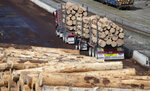 A driver prepares to deliver a load of logs at the Port of Lyttelton near Christchurch, New Zealand, Thursday, Sept. 17, 2020. New Zealand's economy shrank by a record 12.2% in the second quarter due to a strict coronavirus lockdown, but forecasts show some bright spots among the gloom. (AP Photo/Mark Baker)