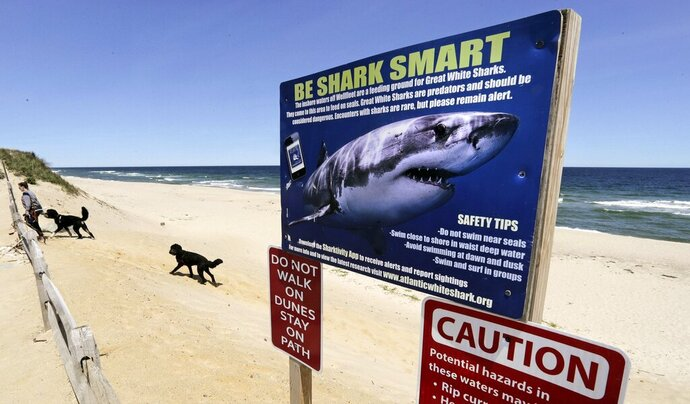 FILE - In this May, 22, 2019, file photo, a woman walks with her dogs at Newcomb Hollow Beach in Wellfleet, Mass., where a boogie boarder was bitten by a shark in 2018 and later died of his injuries. Cape Cod's beaches and towns may be quieter because of the 2020 coronavirus pandemic, but officials are reminding visitors ahead of the July 4 holiday that the famous destination also remains a popular getaway for great white sharks. (AP Photo/Charles Krupa, File)