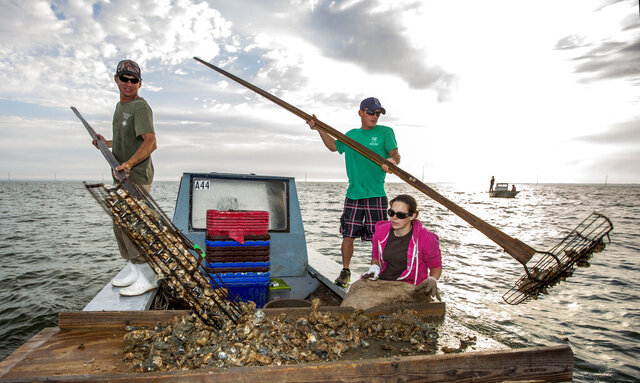 FILE - In this April 2, 2015, file photo, Gene Dasher, left, and Frankie Crosby, center, use wire baskets on the end of 14-foot handles to tong oysters while Misty Crosby separates clumps of oysters at Apalachicola Bay, near Eastpoint, Fla. The Florida Fish and Wildlife Conservation will shut down wild oyster harvesting for as long as five years. The Commissioners hope that the pause and $20 million in restoration and monitoring, will restore a portion of the oyster fishery. (AP Photo/Mark Wallheiser, File)
