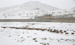 A shepherd walks with a flock of sheep in the snow on the outskirts of Kabul, Afghanistan, Sunday, Jan. 5, 2020. (AP Photo/Rahmat Gul)