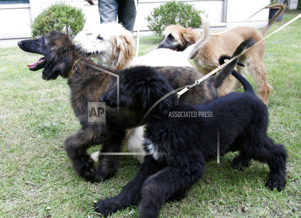South Korea Cloned Dogs