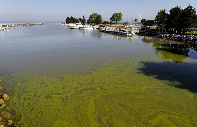 FILE - In this Sept. 15, 2017, file photo, algae floats in the water at the Maumee Bay State Park marina in Lake Erie in Oregon, Ohio. Researchers are expecting another mild algae outbreak on Lake Erie this summer. They expect it to be the first time in more than a decade that the lake will see back-to-back years of mild algae blooms. That's the good news. But scientists at the National Oceanic and Atmospheric Administration say it doesn't mean the shallowest of the Great Lakes is turning the corner just yet.(AP Photo/Paul Sancya, File)