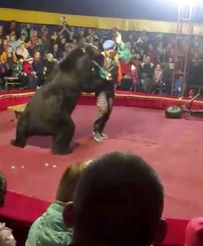 In this video grab provided by Galina Guryeva, a bear attacks the trainer at a circus ring in Olonets, a town 180 kilometers (110 miles) northeast of St. Petersburg, Russia, Wednesday, Oct. 23, 2019.  Officials have opened a criminal investigation after a circus bear attacked and injured its trainer during a performance in northern Russia. (Galina Guryeva via AP)