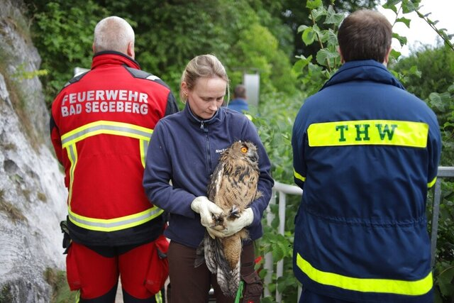 A member of a voluntary fire brigade hold an young owl after the rescue of the animal from the bottom of an old well at the Siegesburg castle in Bad Segeberg, Germany, Saturday, July 25, 2020. Before sending a firefighter down the 40 meter, 130 feet, well-shaft to save the eagle-owl, rescue workers determined the oxygen levels at the bottom were very low. They pumped fresh air into the well using long tubes connected to an oxygen bottle as a precaution before a firefighter, wearing his own oxygen mask, rappelled down and rescued the bird. ( Freiwillge Feuerwehr Bad Segeberg via AP)