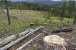 Stumps are seen on a hillside in the Black Hills National Forest, on July 14, 2021, near Custer City, S.D. Government scientists say logging needs to be cut back by at least half in the forest, but timber company representatives say that conclusion is flawed and would hurt the region's economy. (AP Photo/Matthew Brown)