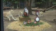 Argentina Zoo