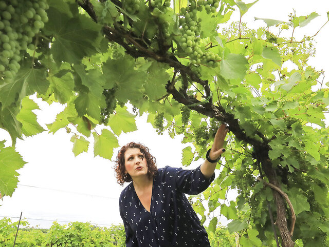 WIld Hills Winery co-owner Colleen Halverson views the emerging fruit of a grapevine in the vineyard of the business near Muscoda, Wis. Tuesday, July 21, 2020. The winery, formerly known as Weggy Winery, produces about 2,000 gallons of wine a year. Halverson and husband Aaron want to eventually increase production to 10,000 gallons a year. (John Hart/Wisconsin State Journal via AP)