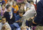 In this photo taken in 2004, Aurora, a rare white gyrfalcon and Air Force Academy mascot, visits Pinon Valley Elementary School in Colorado Springs, Colo., on the arm of an academy cadet in the falconry program. Aurora, injured at West Point during an apparent prank before the annual rivalry game between the two service academies Saturday, Nov. 3, 2018, is back home and showing signs of improvement. (Jerilee Bennett/The Gazette via AP)