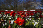 Lanes and benches void of visitors are seen at the world-renowned, Dutch flower garden Keukenhof which was closed because of the coronavirus, in Lisse, Netherlands, Thursday, March 26, 2020. Keukenhof will not open this year after the Dutch government extended its ban on gatherings to June 1 in an attempt to slow the spread of the virus. Instead of opening, it will allow people to virtually visit its colorful floral displays through its social media and online channels. The new coronavirus causes mild or moderate symptoms for most people, but for some, especially older adults and people with existing health problems, it can cause more severe illness or death. (AP Photo/Peter Dejong)