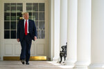 President Donald Trump arrives to speak during an event on police reform, in the Rose Garden of the White House, Tuesday, June 16, 2020, in Washington. (AP Photo/Evan Vucci)