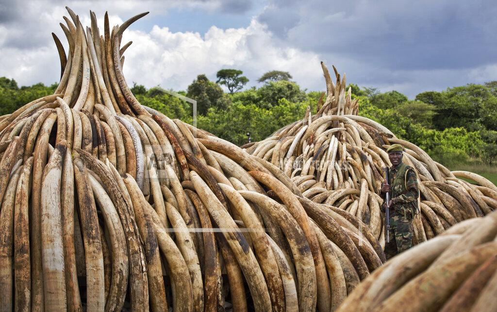 APTOPIX Kenya Ivory Burning